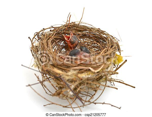 Babyvogel in einem Nest. - csp21205777