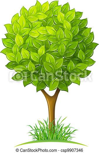 Baum mit grünen Blättern - csp9907346