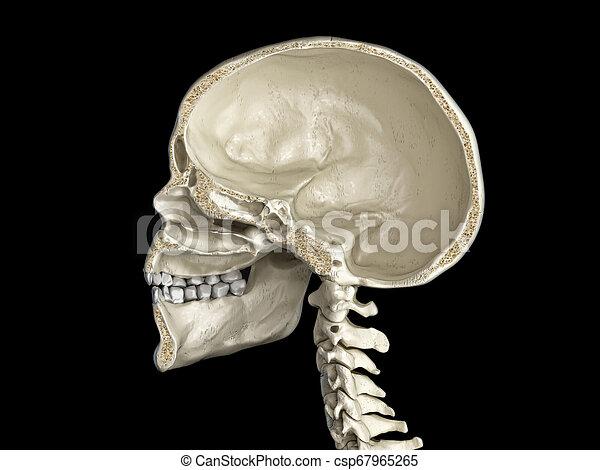 cross-section., sagittal, menschlicher schädel, mittler - csp67965265