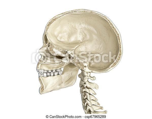 cross-section., sagittal, menschlicher schädel, mittler - csp67965289