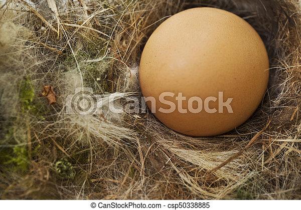 Eier in einem Nest. - csp50338885