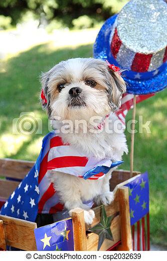 Ein Hund verkleidet sich für eine Parade am 4. Juli - csp2032639