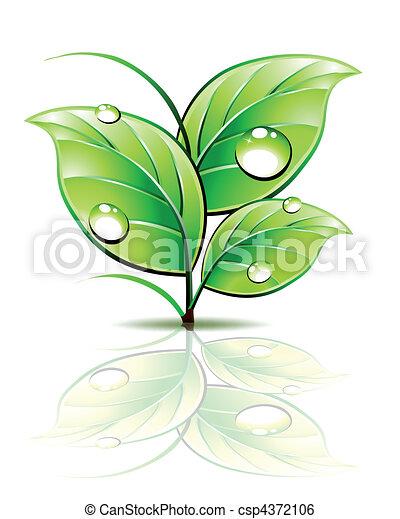 Ein Teil von Sprout mit Tau auf grünen Blättern. Vector - csp4372106