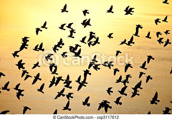 Ein Vogelschwarm. - csp3117612
