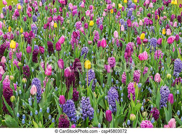 Formaler Frühlingsgarten. - csp45803072