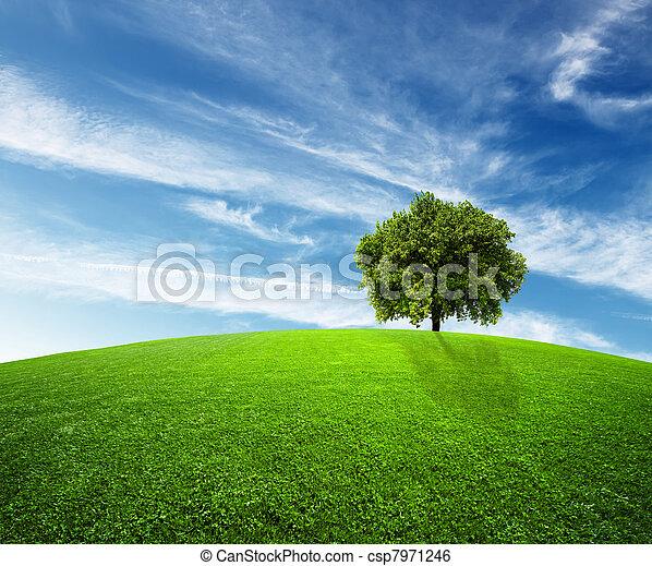 Grüne Umwelt - csp7971246