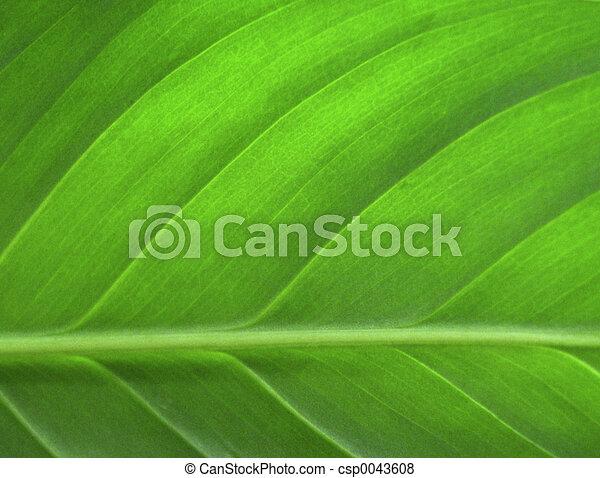 Grünes Blatt schließen - csp0043608