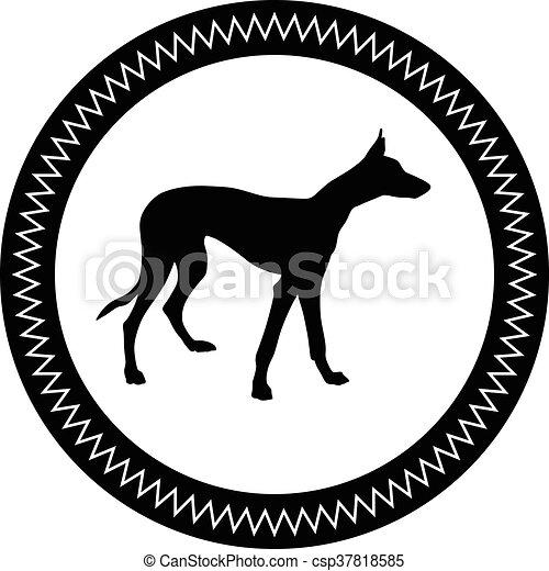 Greyhound. - csp37818585