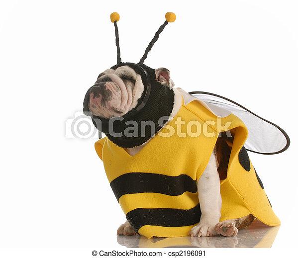 Hund verkleidet als Biene - csp2196091