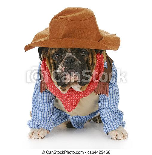 Hund verkleidet sich als Cowboy - csp4423466