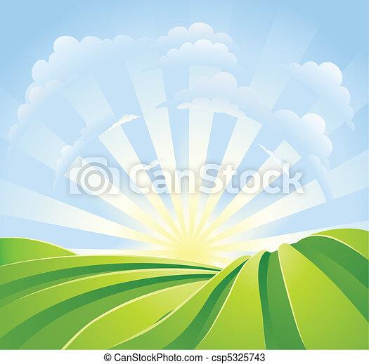 Idyllische grüne Felder mit Sonnenschein und blauer Himmel - csp5325743
