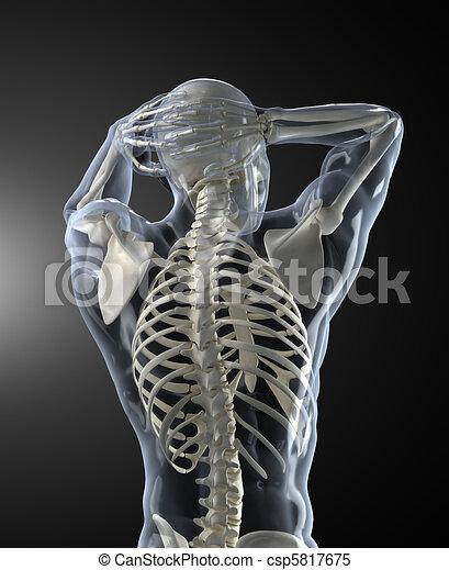 körper prüft, medizin, zurück, menschliche , ansicht - csp5817675