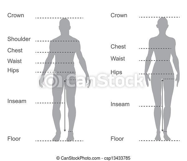 koerper, maße, diagramm, tabelle, weibliche , maß, mann, kleidung, größe - csp13433785