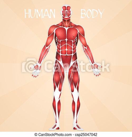 koerper, menschliche  - csp25047042