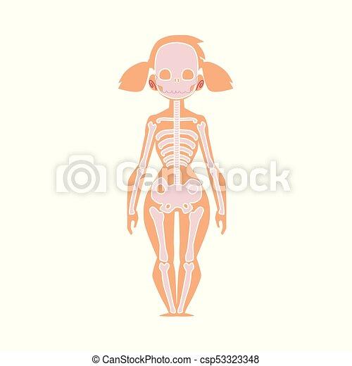 Anatomiediagramm von menschlichem Skelett, weiblicher Körper - csp53323348