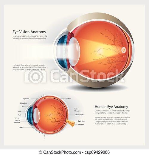 Menschliche Augen-Anatomie und normale Linsen-Vektorgrafik - csp69429086