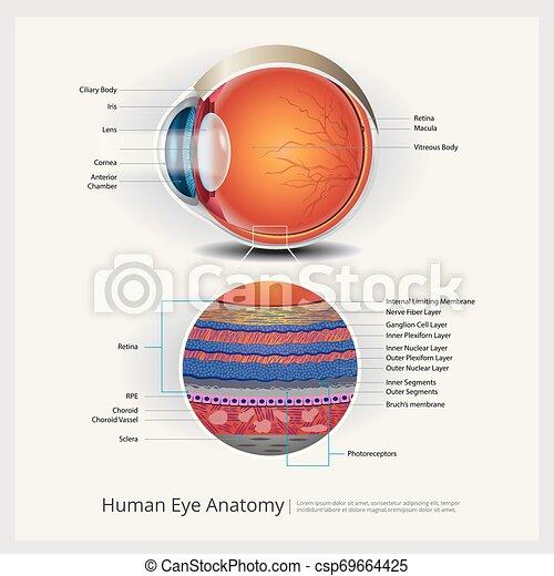 Menschliche Augen-Anatomie und normale Linsen-Vektorgrafik - csp69664425