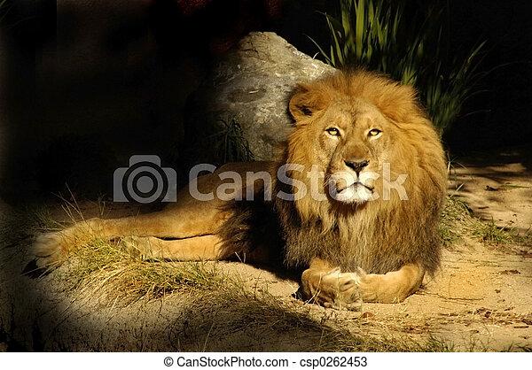 Löwenkönig Salbei - csp0262453