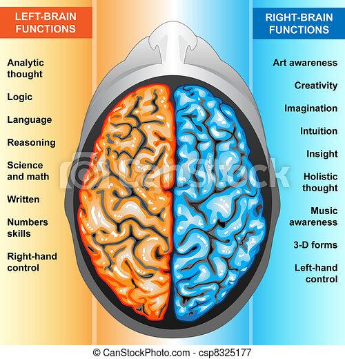 Menschliches Gehirn links und rechts - csp8325177