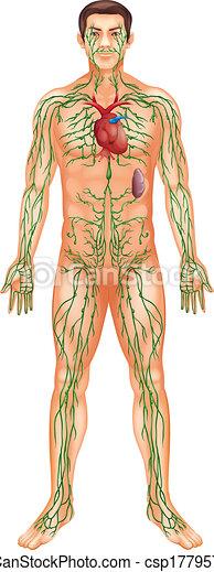 Lymphsystem - csp17795744