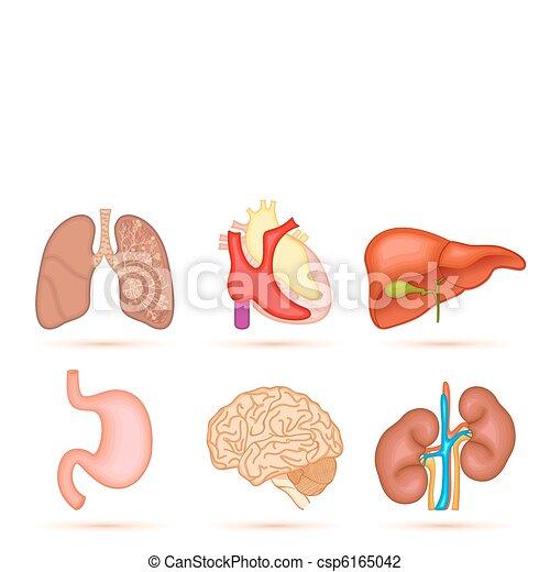 menschliche , organ - csp6165042