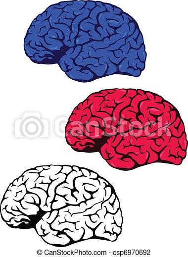 Menschliches Gehirn - csp6970692
