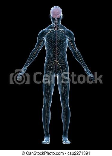 Menschliches Nervensystem - csp2271391