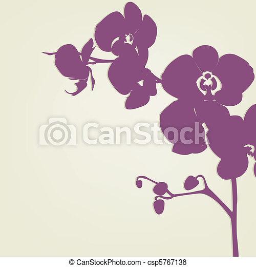 Orchidee - csp5767138
