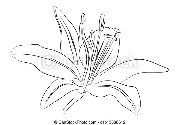 Outline Lily. - csp13638612