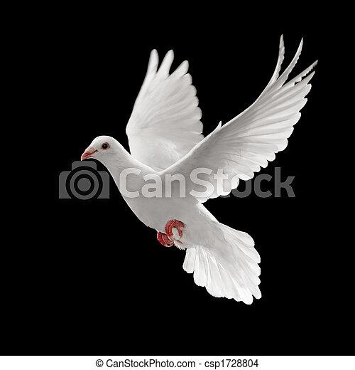Pigoen fliegt. - csp1728804