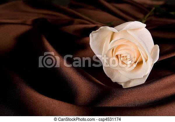 Weiße Rose auf brauner Seide - csp4531174