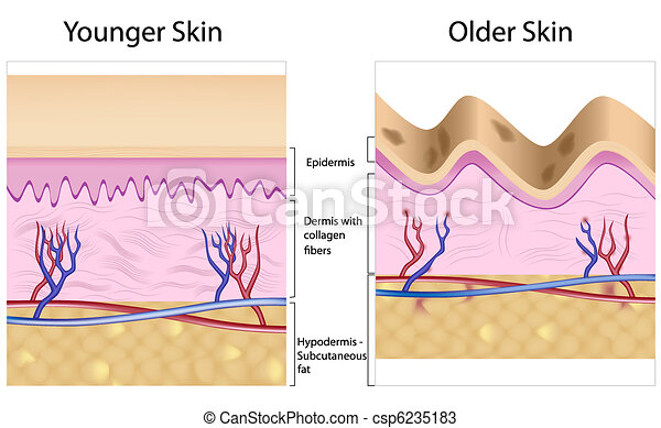Wrinkled gegen glatte Haut - csp6235183