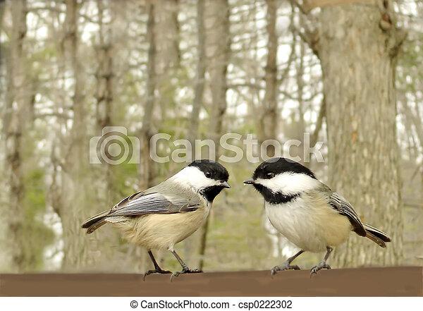 Süßer Vogel - csp0222302