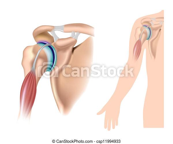 Schulter Anatomie, Eps 10. - csp11994933