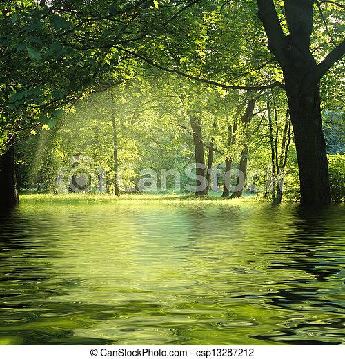 Sonnenstrahlen im grünen Wald mit Wasser - csp13287212