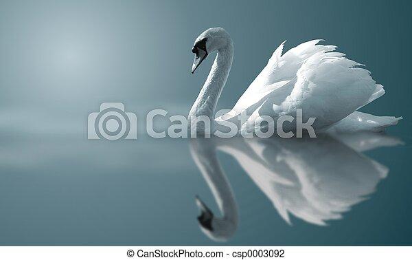 Swan Reflektionen - csp0003092