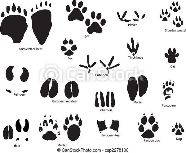 Tierspuren mit Titel - csp2278100