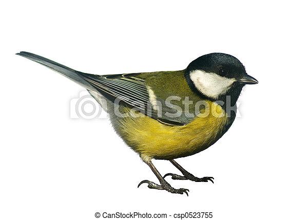 Titmouse Vogel, isoliert auf weiß - csp0523755