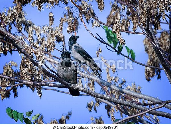 Vögel - csp0549701