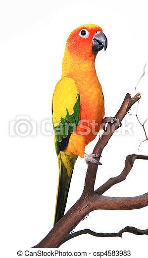Wunderschöner Sonnenschutzvogel auf einem Ast. - csp4583983